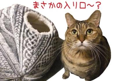 新作「うんちゃんねこハウスに入れないのTシャツ」販売開始!