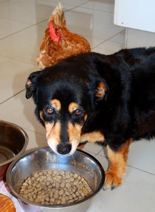 犬のローテーションフード 回転食 毎日の食餌のこと①