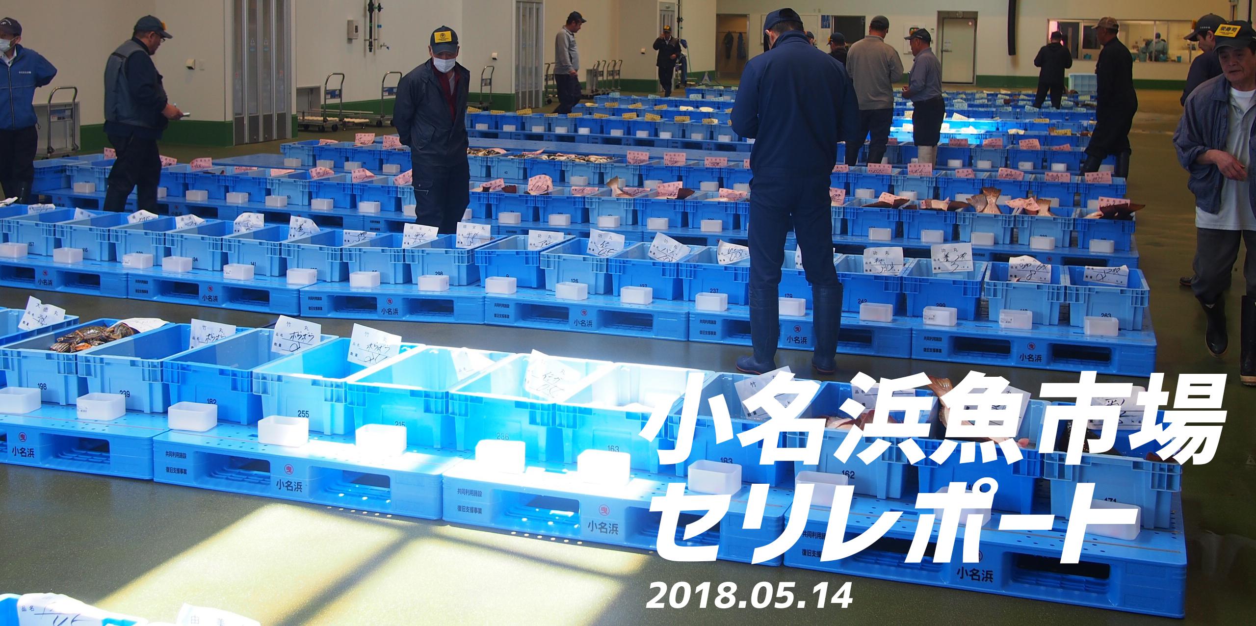 小名浜魚市場のセリレポート!