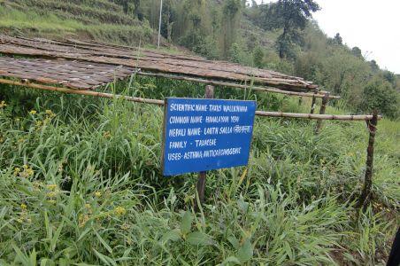 紅茶の生産地、イラムに行ってきました その2