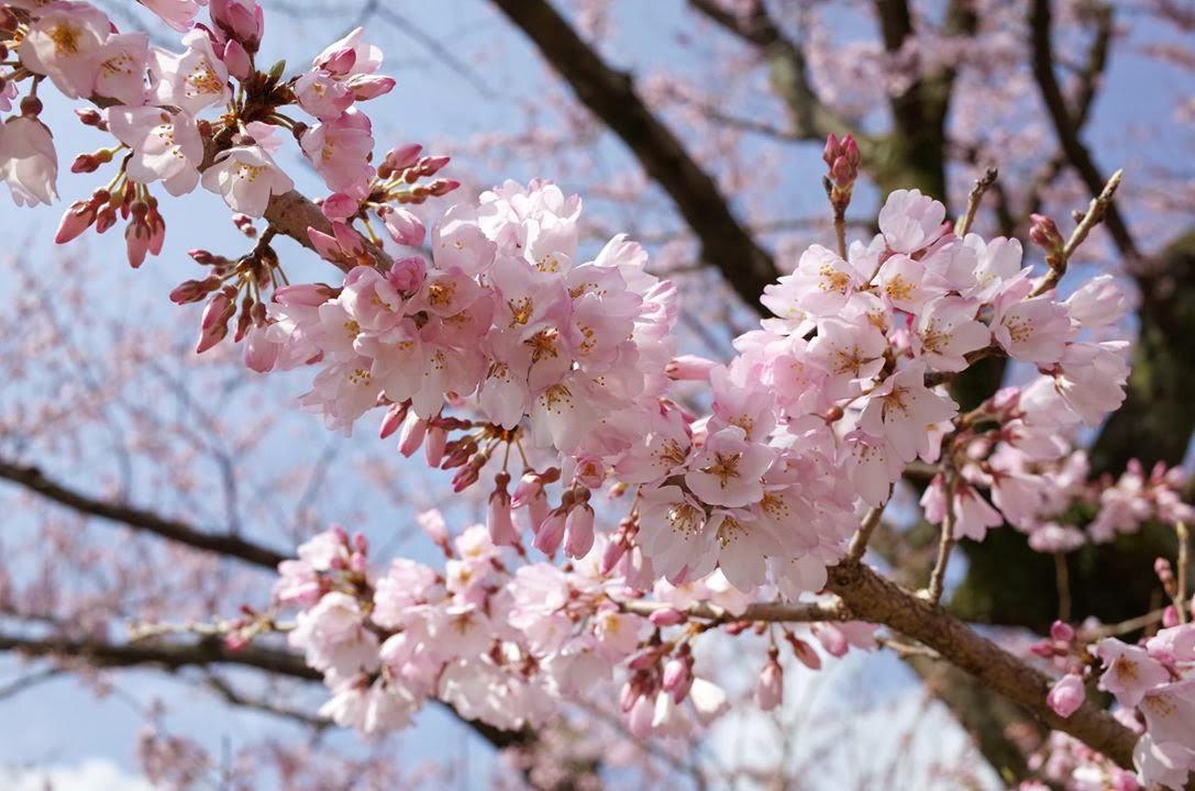 2020/4/19(日)ビーガングルメ祭り東京に出店いたします→延期となりました