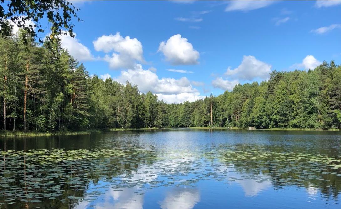森が教えてくれた「暮らしのヒント」   私の北欧での暮らし。vol.7