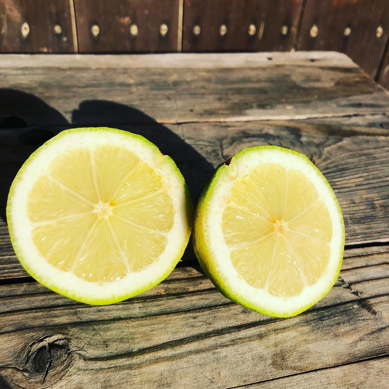 レモンは人気ですねー🍋