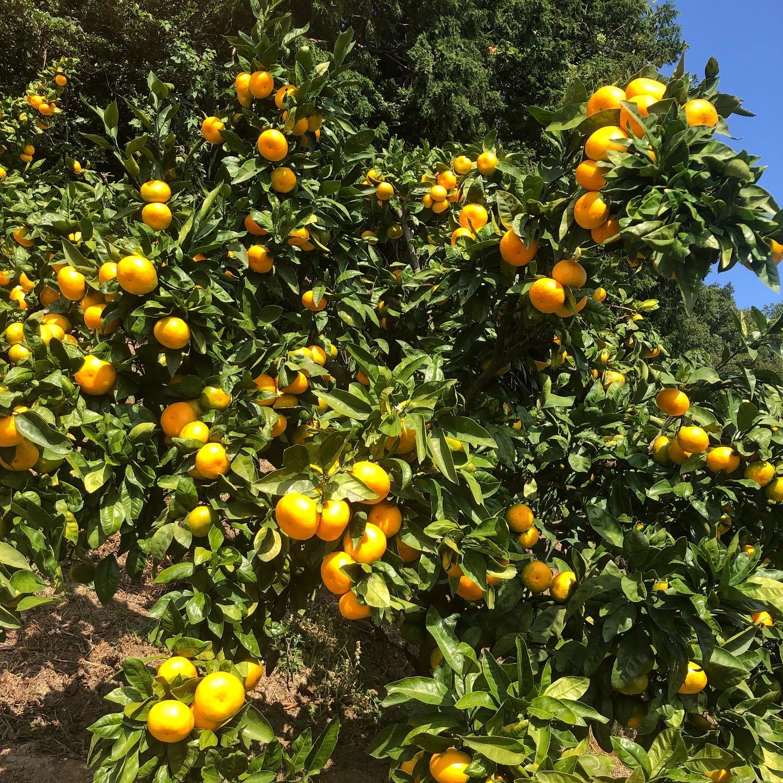 キレイなオレンジ色🍊