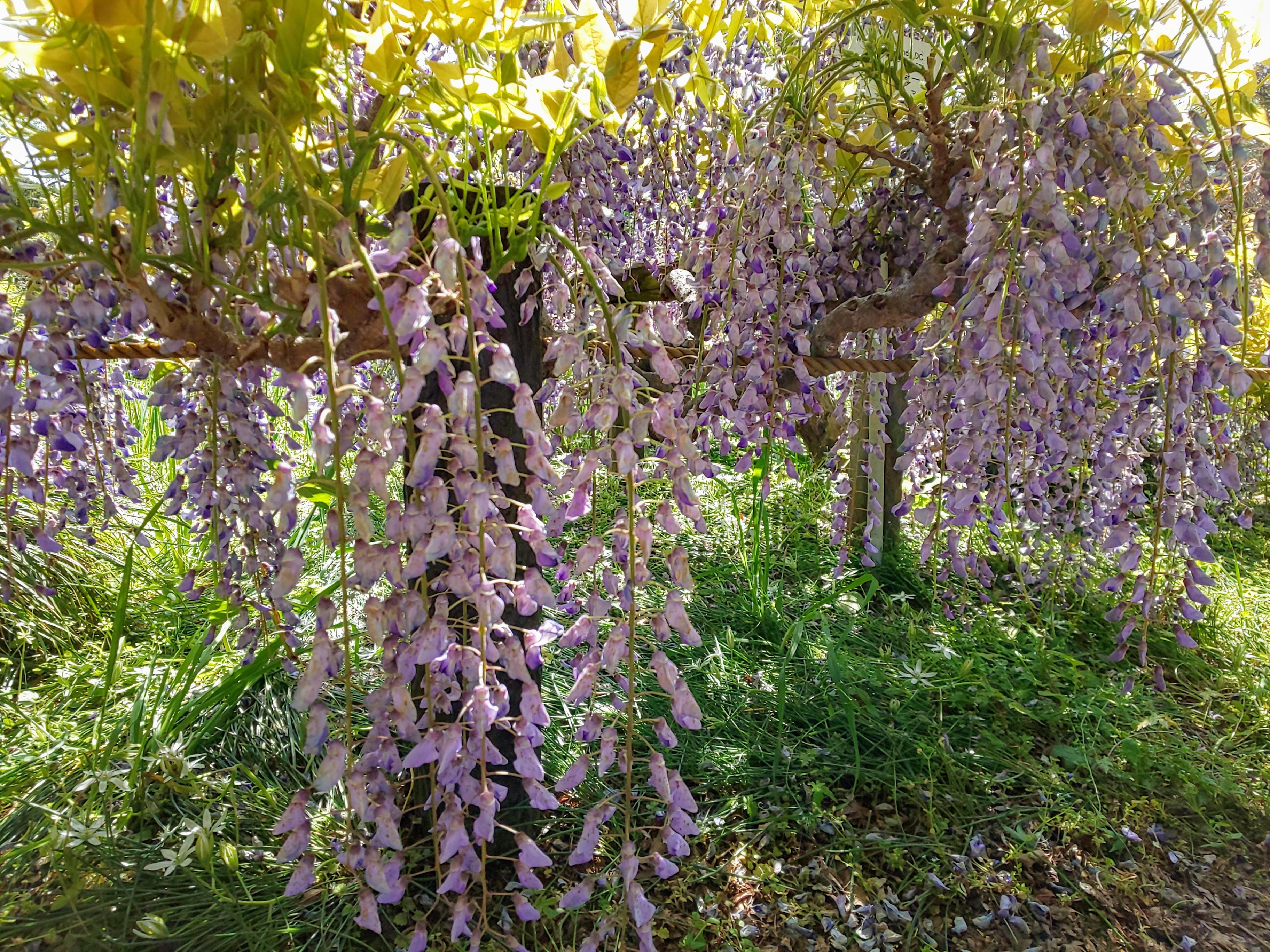 小石川植物園~天茶とお散歩