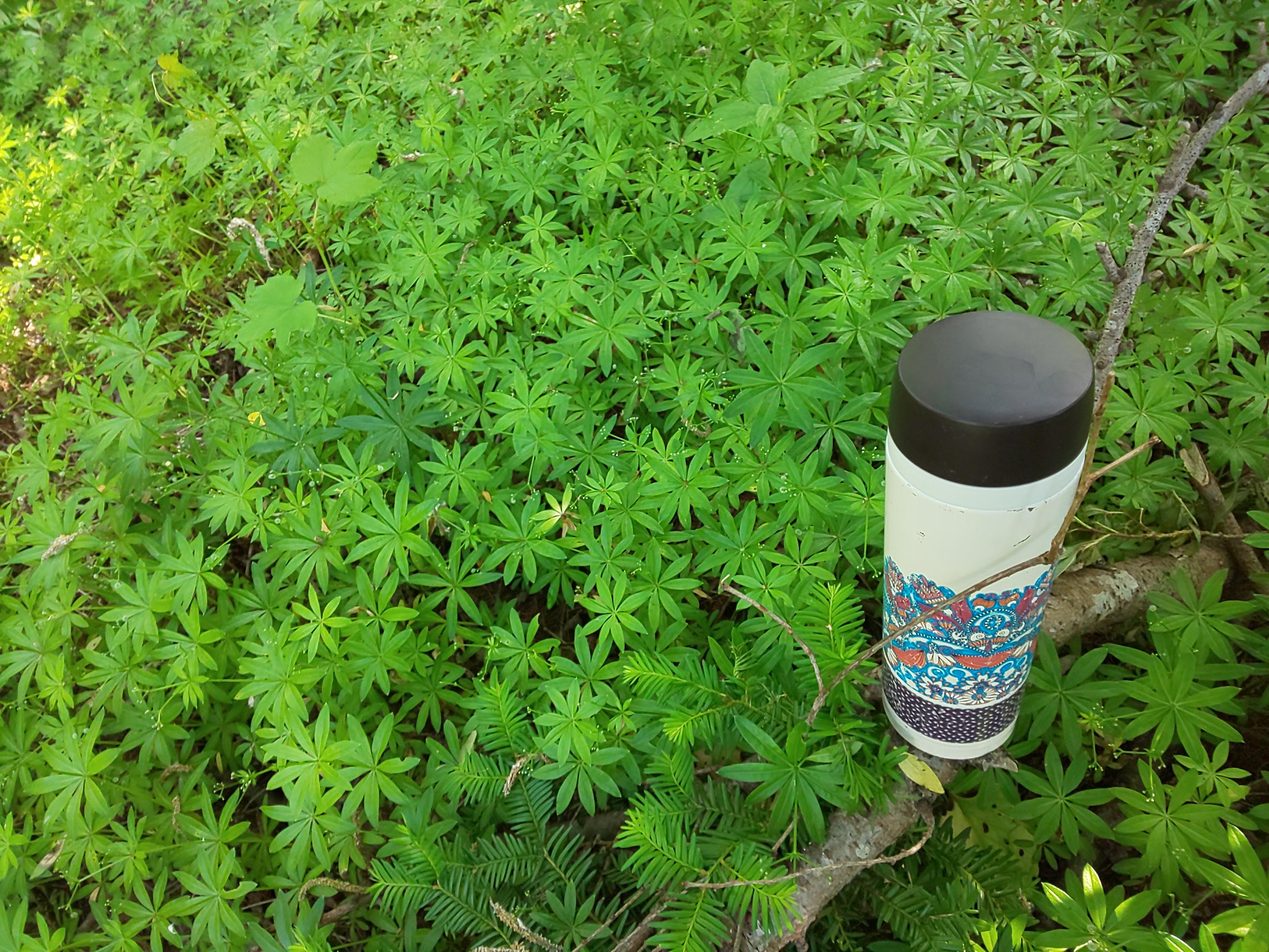 コロポックルの森~天茶とお散歩