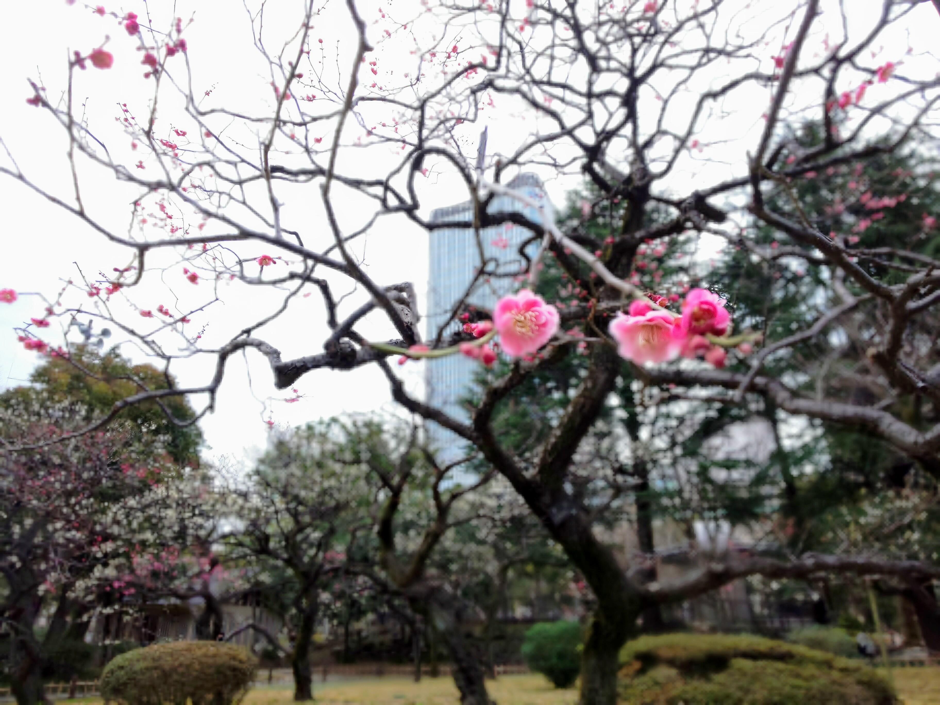 花粉に負けず!神保町から日比谷~天茶とお散歩