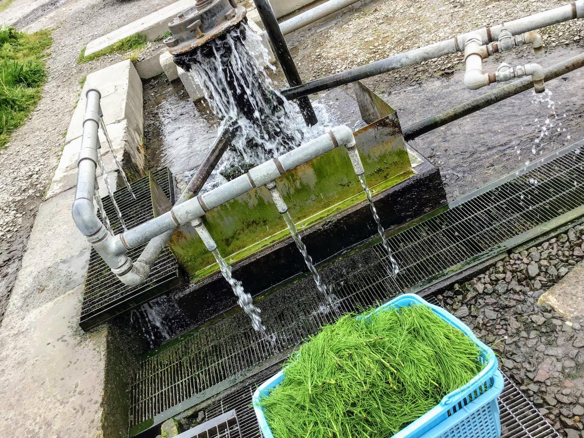 豊かな湧き水