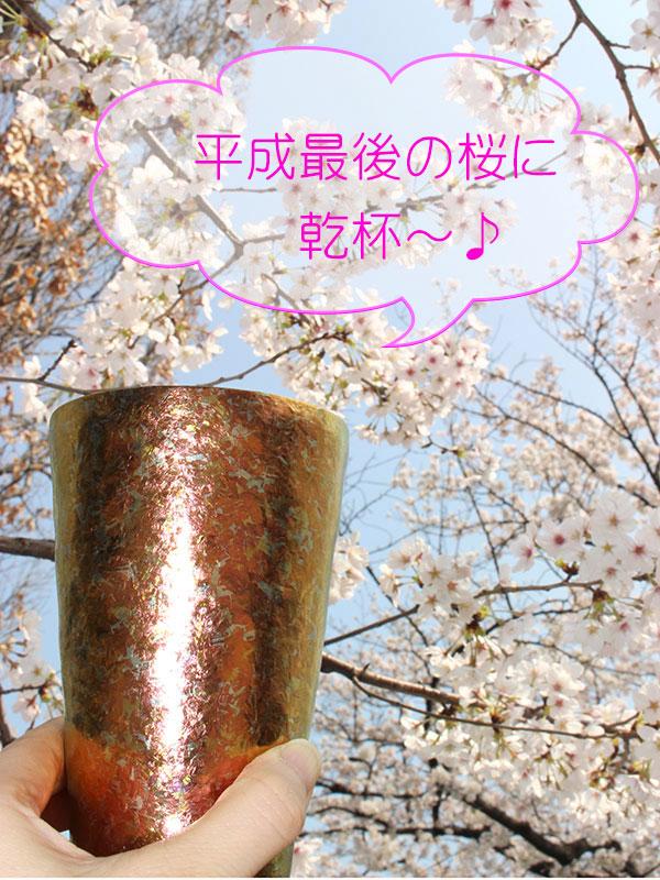 平成最後の散りゆくサクラに乾杯!