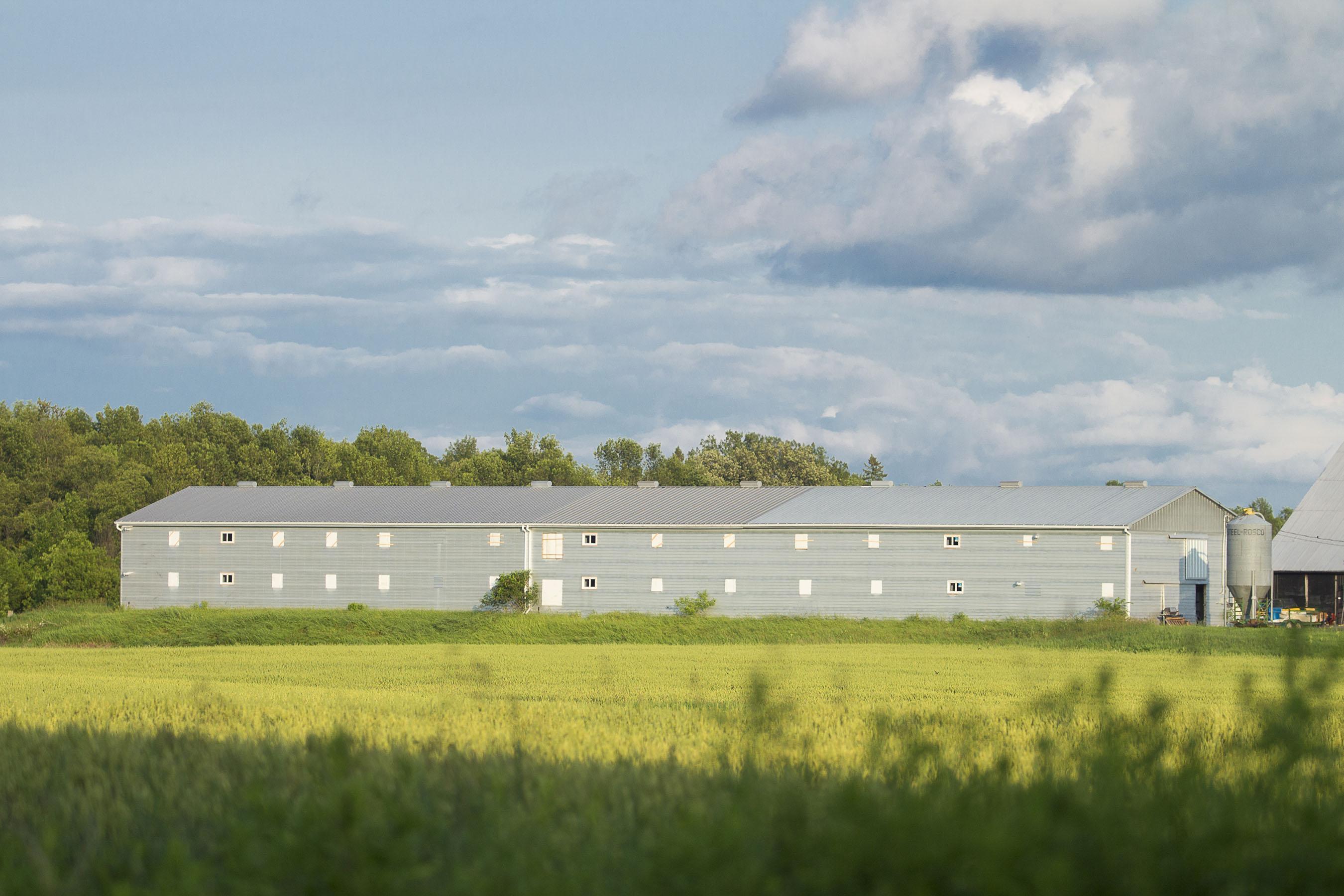 カナダ産オーガニックコオロギの生産現場
