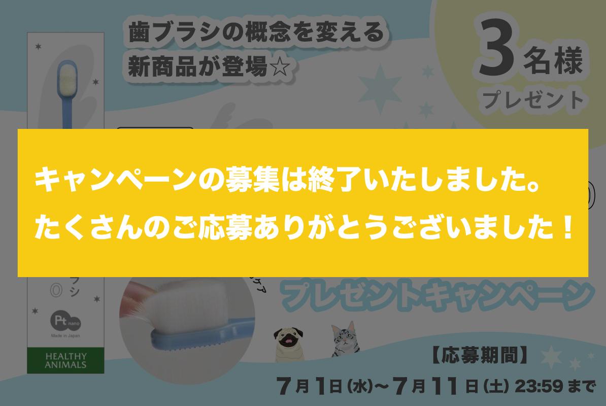 『天使の羽ブラシ20000発売記念プレゼントキャンペーン』募集終了のお知らせ