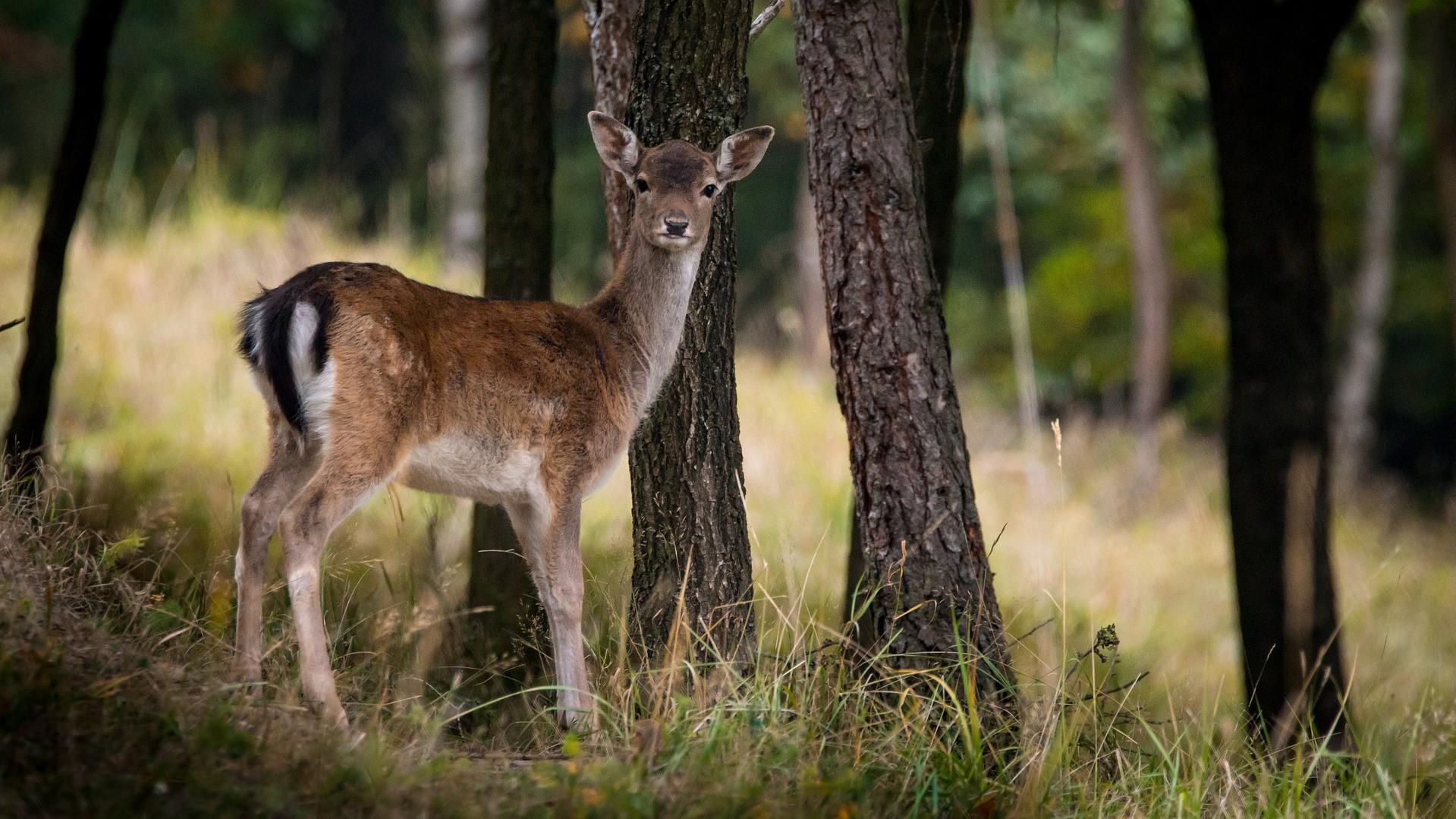 鹿肉を食べよう! 食事の時間は社会問題に向き合えるタイミング。