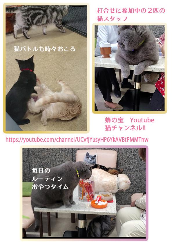 💛蜂の宝 猫チャンネル 【Youtube】