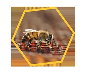 【連載】1 ★ミツバチがくれた無限の贈り物★