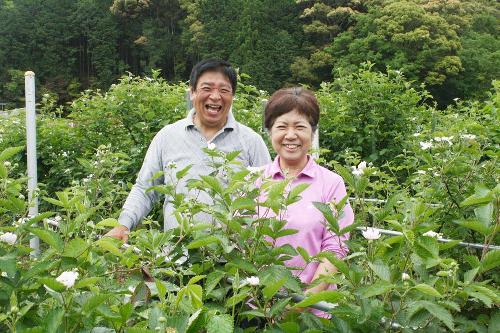 土佐の高知発ブラックベリー栽培期間中農薬不使用 お二人のブラックベリー生産への情熱と愛情は・・・
