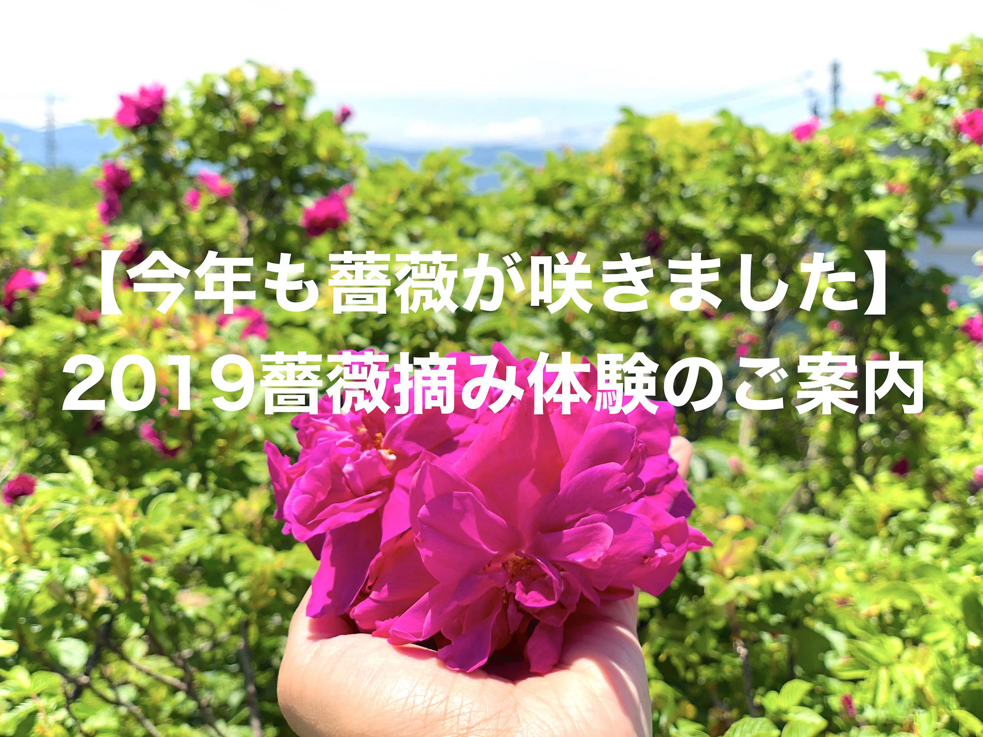 【2019年】長野蓼科農園での薔薇摘み体験のご案内