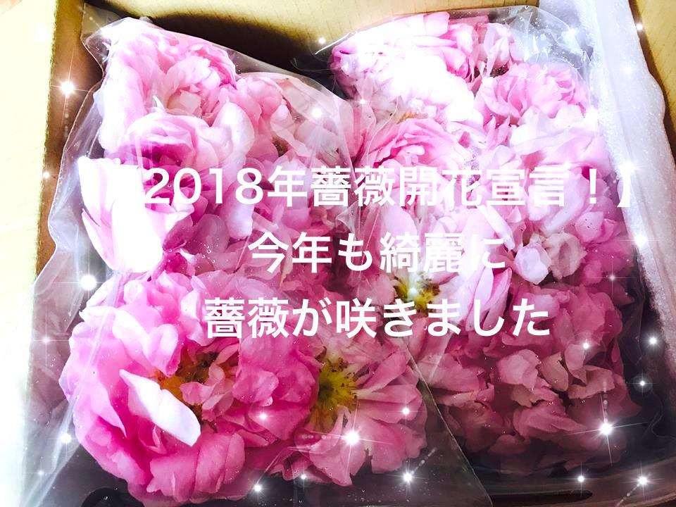 【リアルローズ速報】今年も薔薇が咲きました!