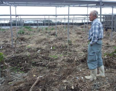 【沖縄県産訳ありマンゴー】2年をかけた土づくり。おじーこだわりのマンゴーをぜひお召し上がりください。