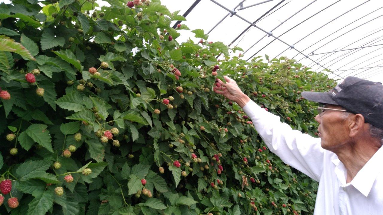 アドベリーの収穫が始まりました!