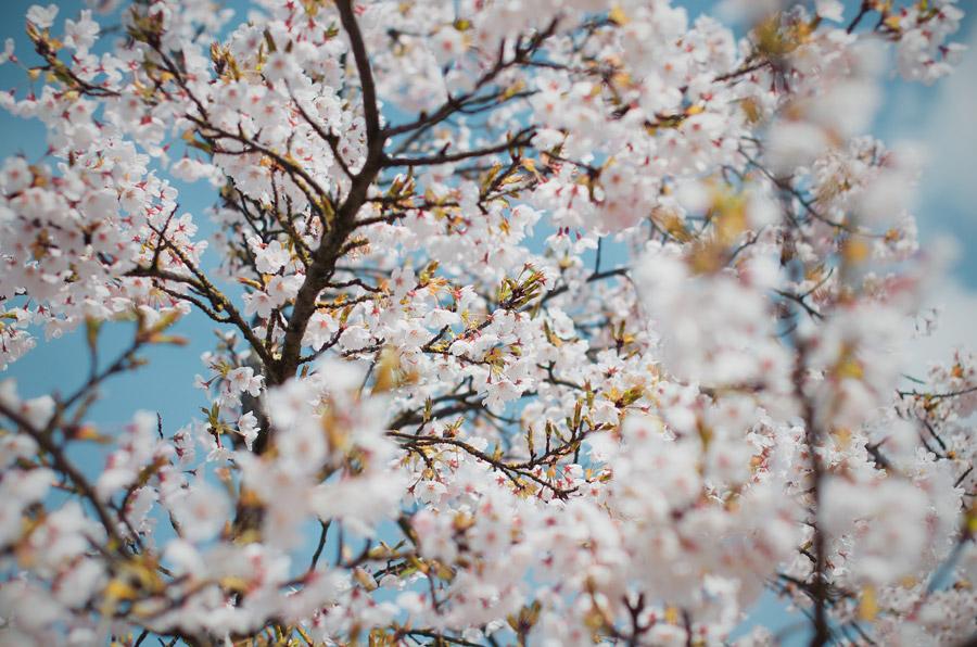 春のファッション ~ 季節ごとに服の色を変える!?