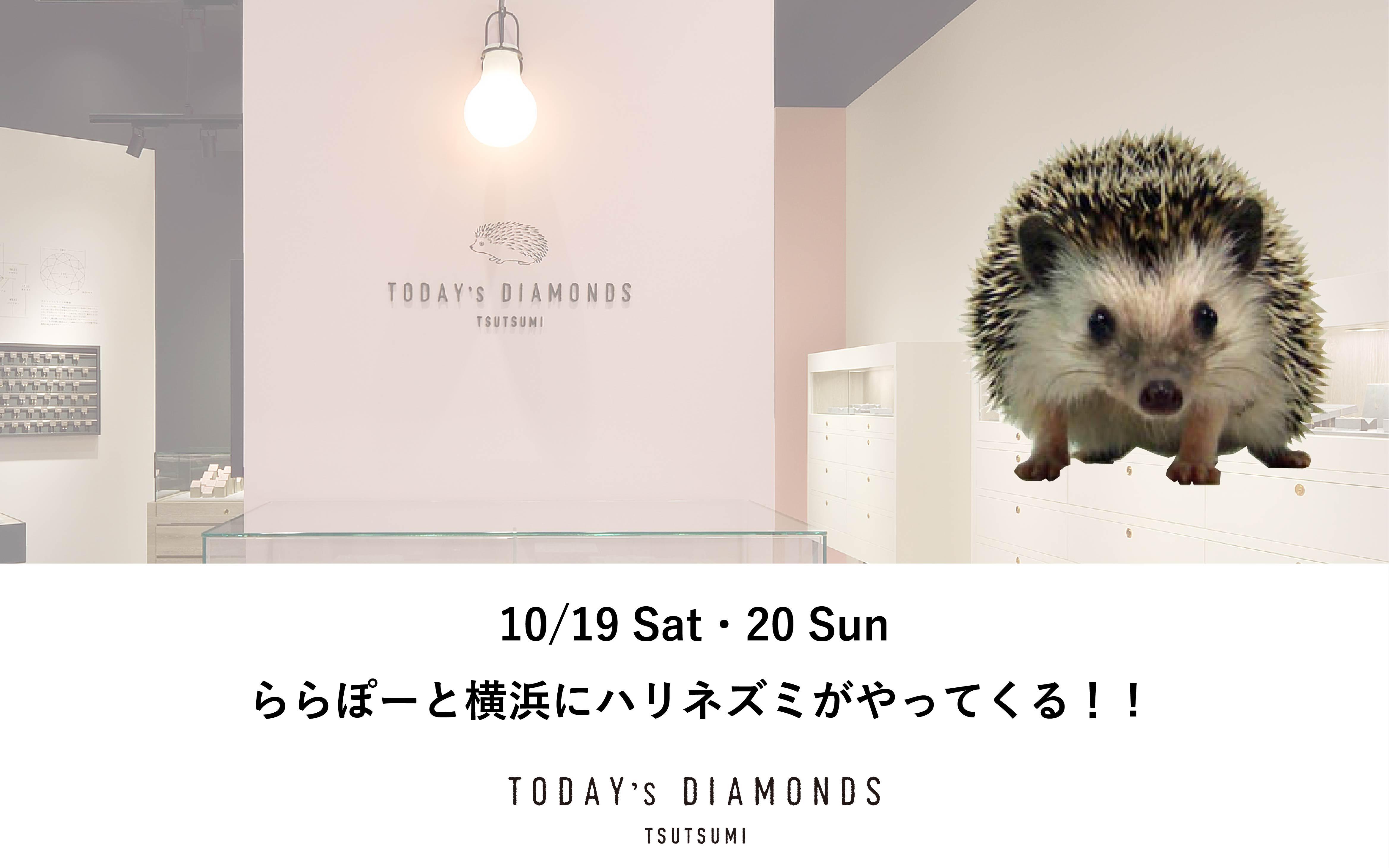 ららぽーと横浜にハリネズミがやってくる!