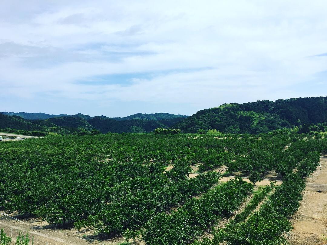 2018 ~ 2019 【収穫スケジュール予定】