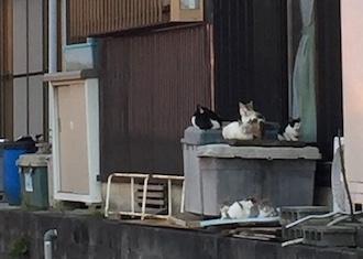 個人でのTNR・子猫保護 体験記 (滋賀県)