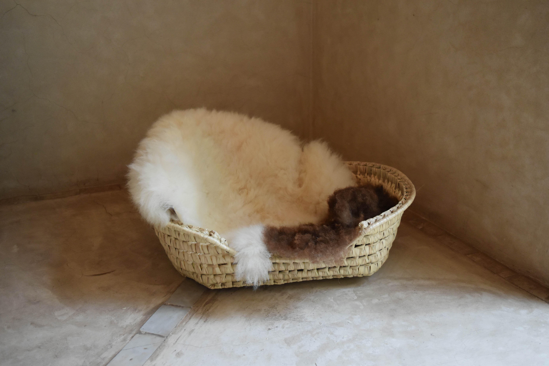【再入荷】ネコのカゴベッド