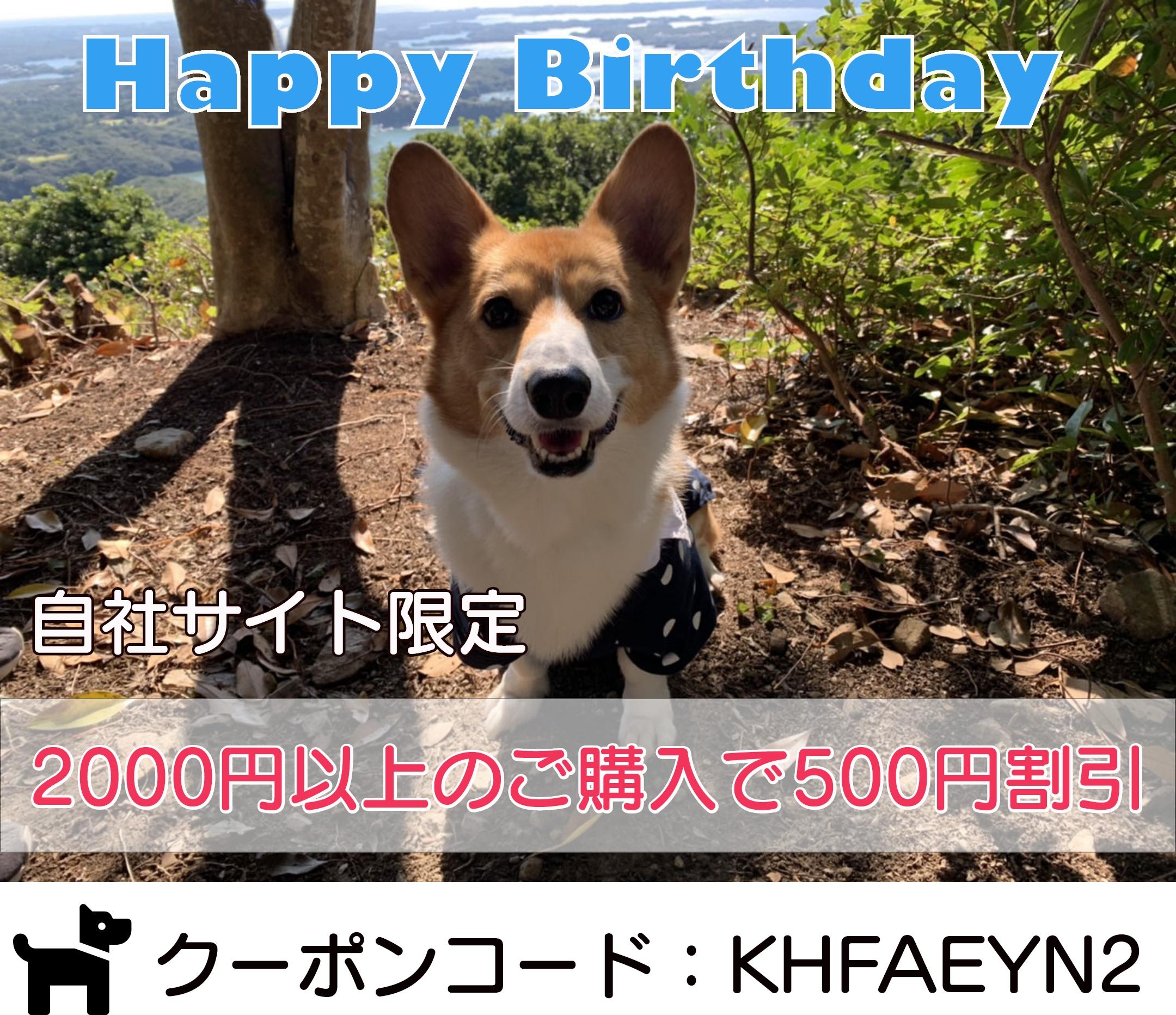 看板犬コーギー桃太郎8回目の誕生日!記念500円クーポン発行中!~3/25 0時まで!