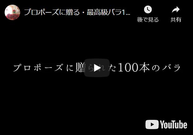 プロポーズに・最高級バラ100本の花束制作動画2020.11.21撮影