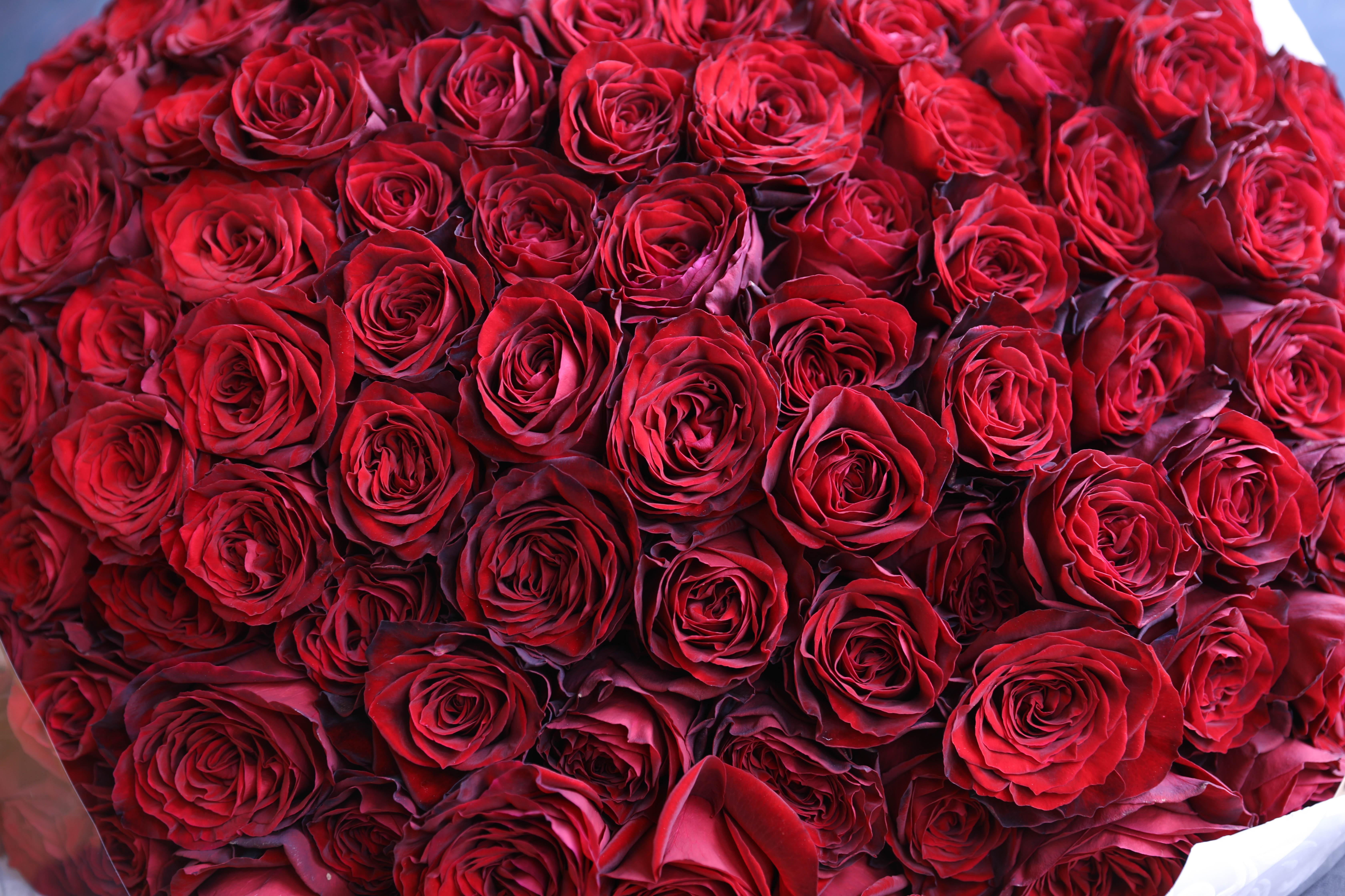 108本のバラ
