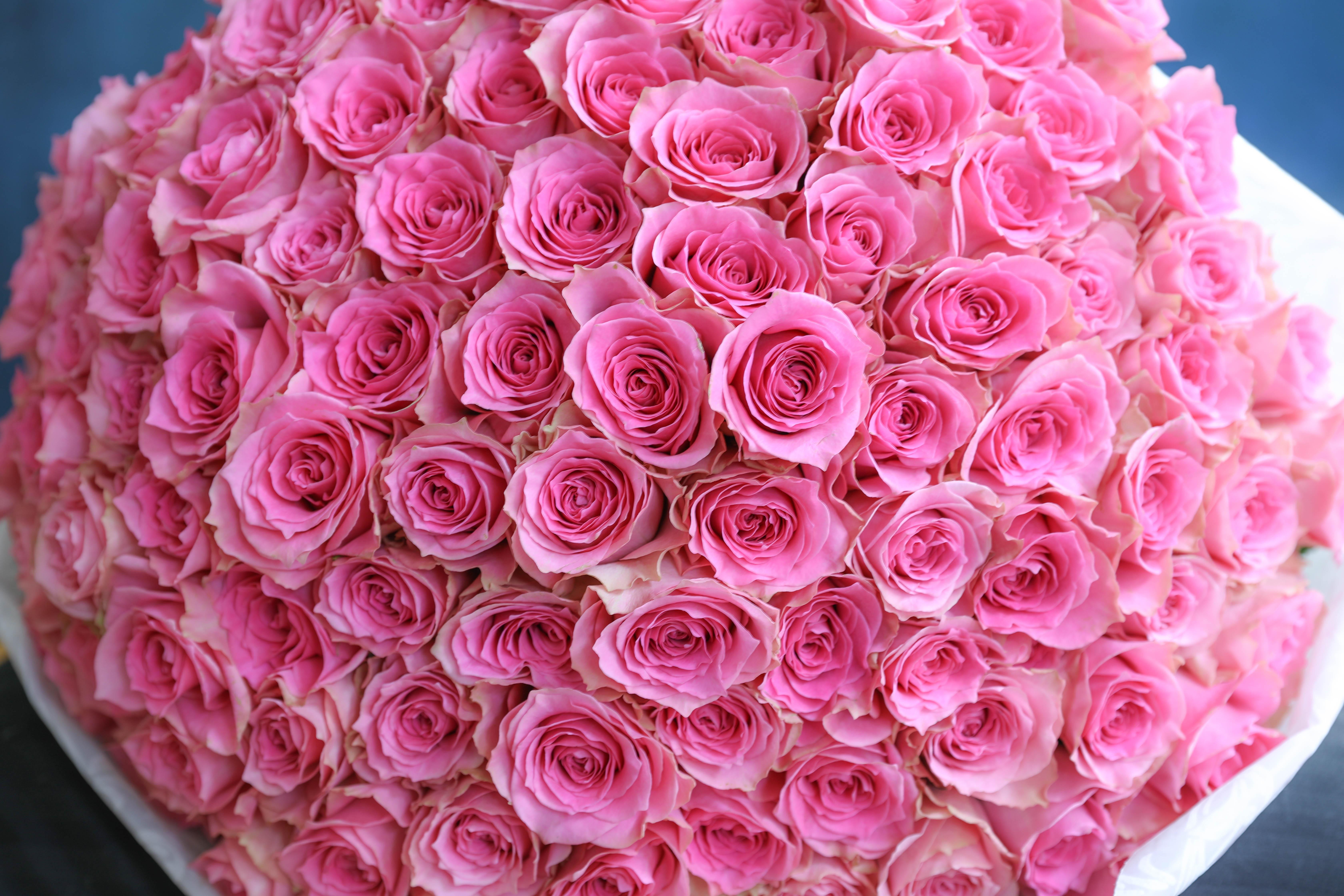 お誕生日に贈るバラ100本の花束制作動画 【2020.03.04撮影】