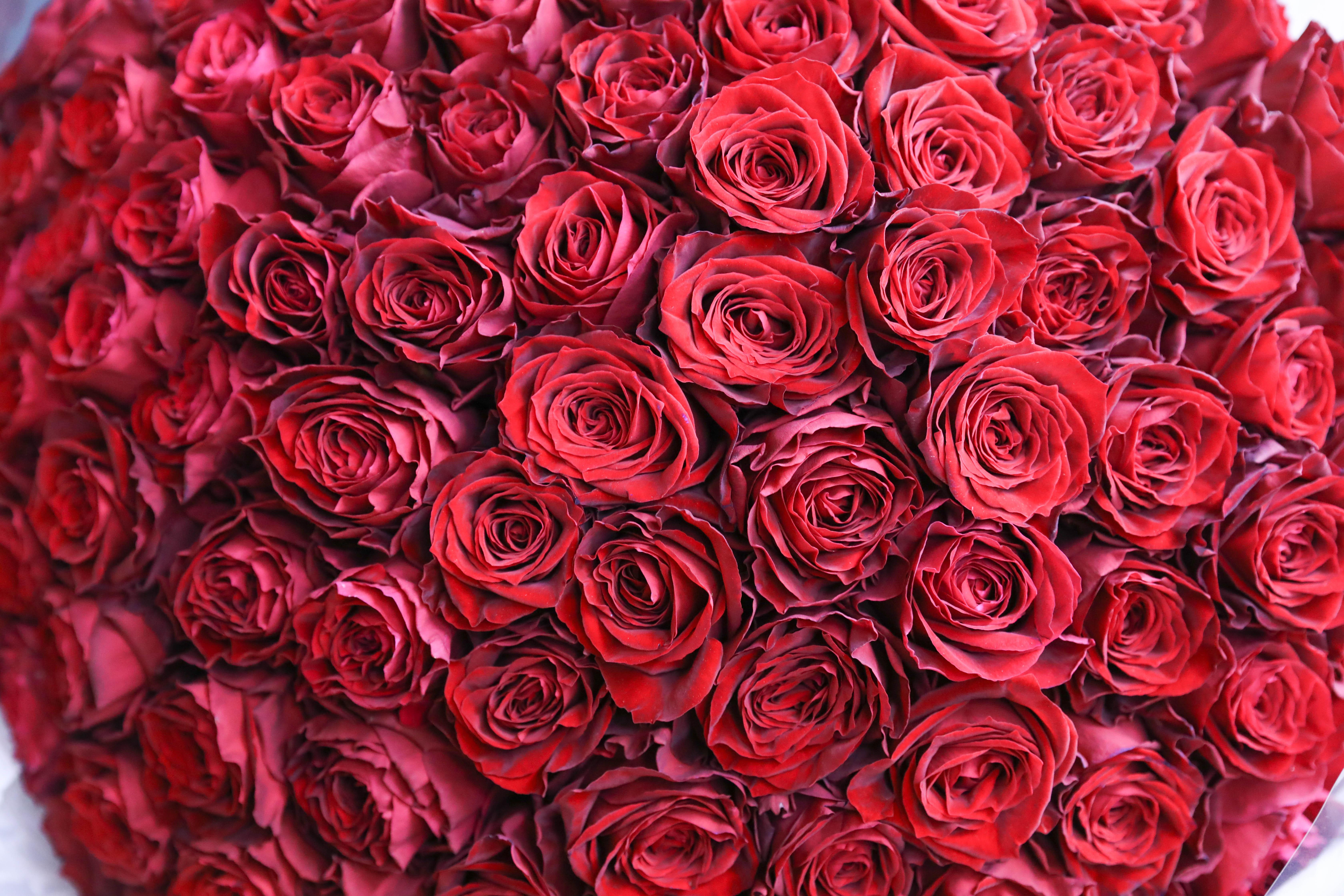 【プロポーズに】バラ100本の花束制作動画 2020/03/19撮影