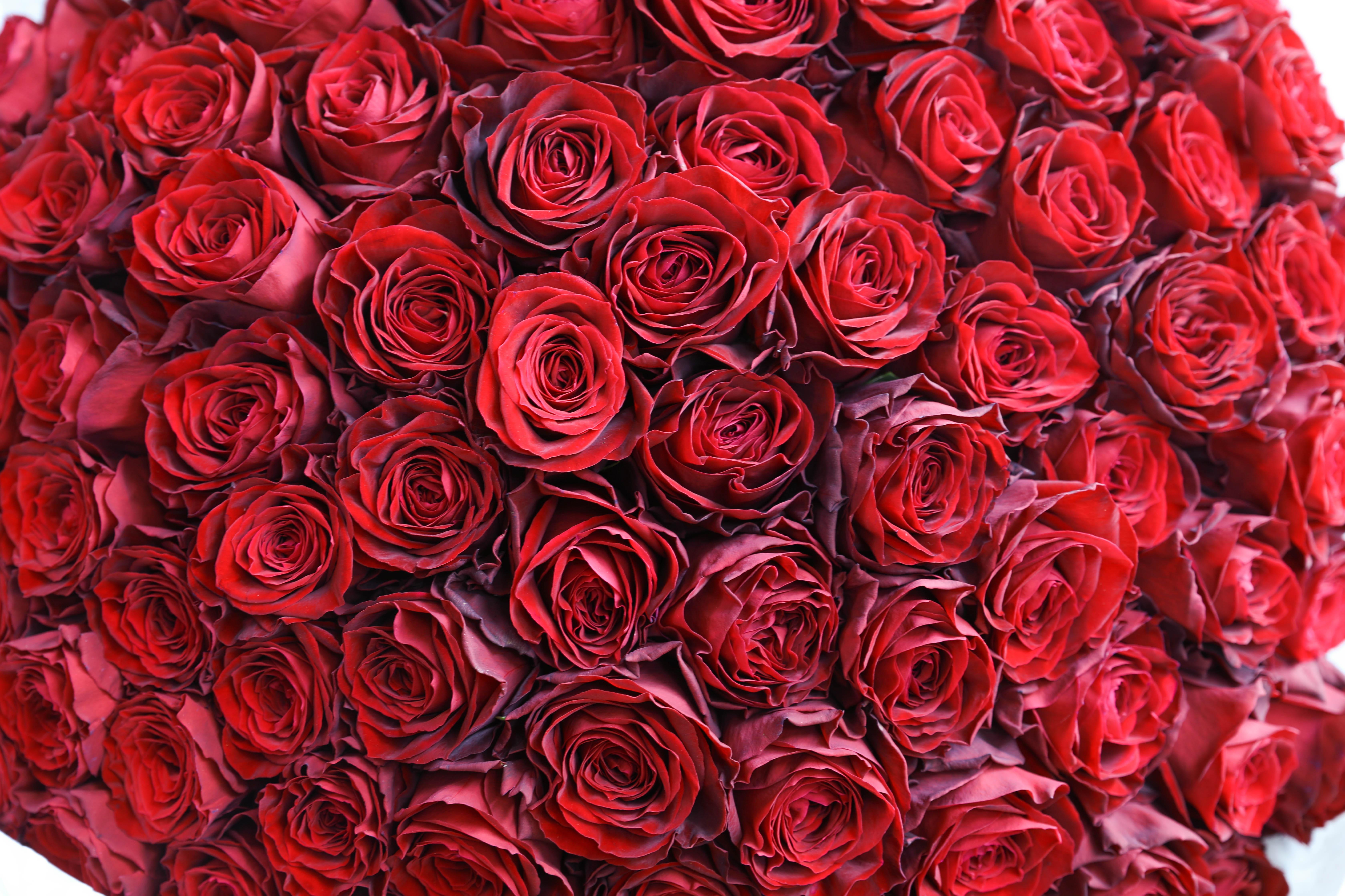 お誕生日プレゼントとして・100本の赤いバラの花束制作致しました