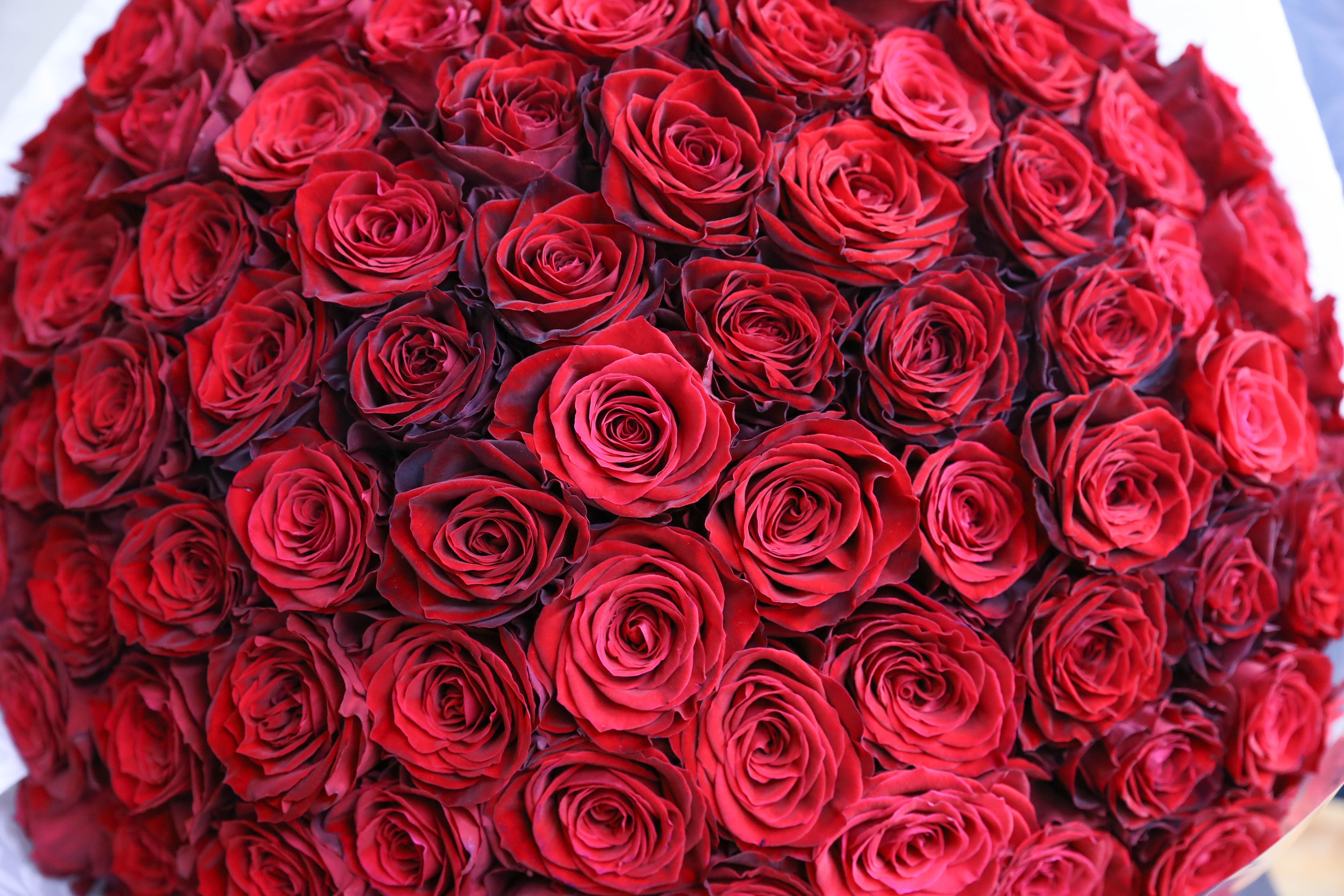 【動画】卒業に贈るバラ100本の花束・制作動画 2020/03/16撮影