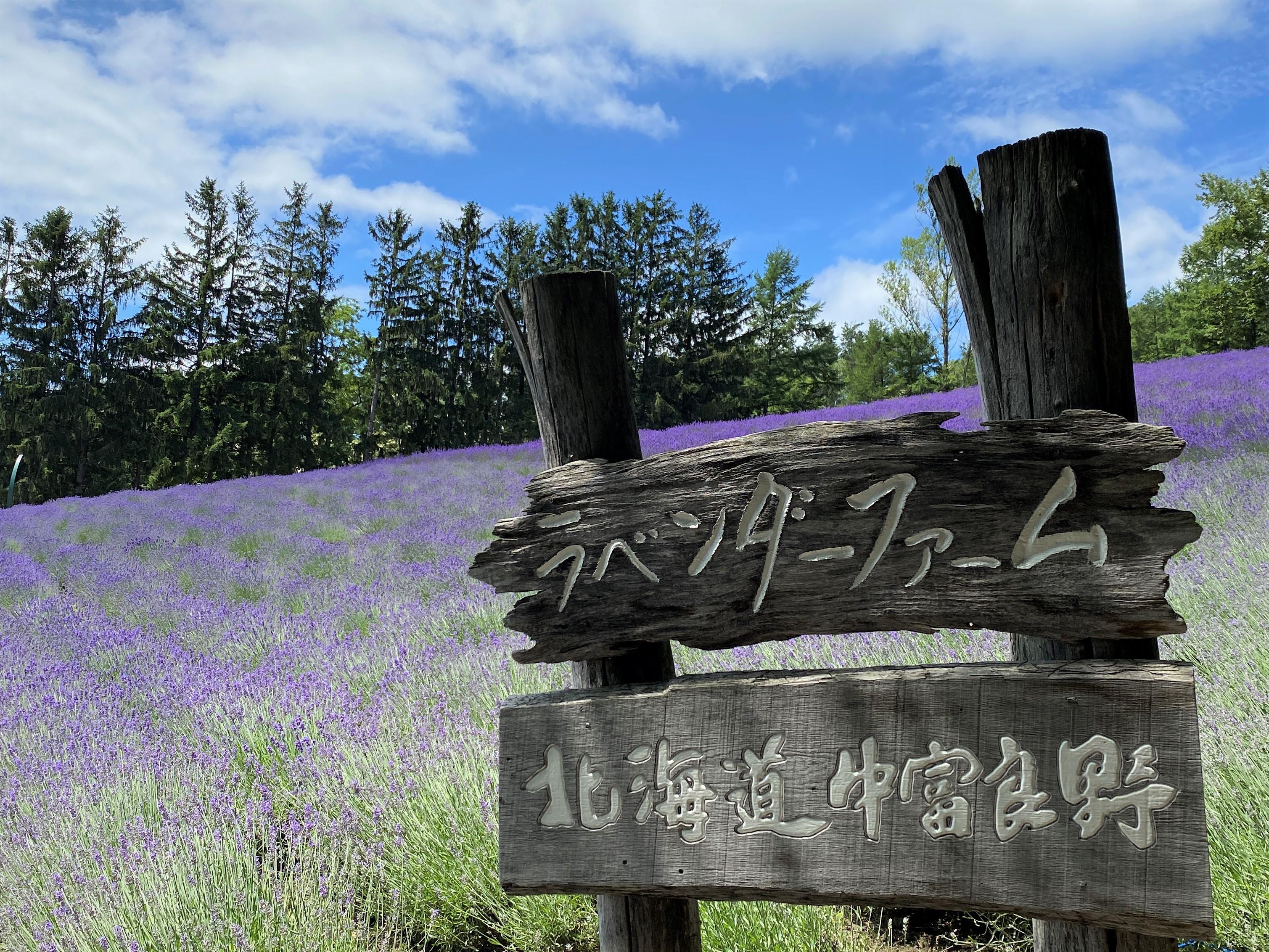 北海道・夏の絶景 【 ラベンダー 】