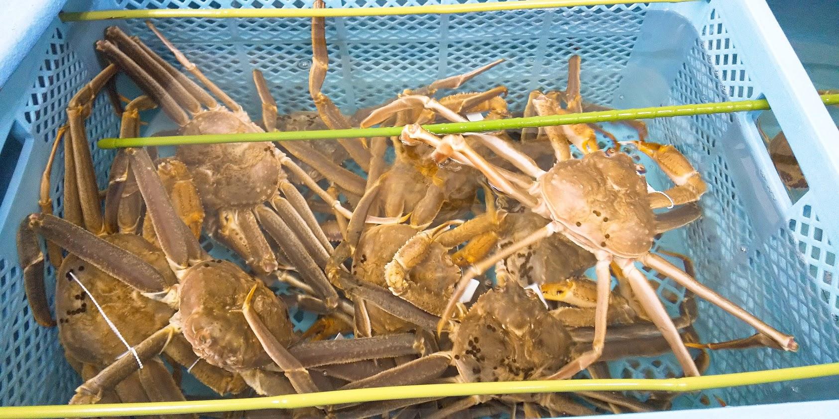 本ズワイ蟹、食べられるのもあと1週間…!