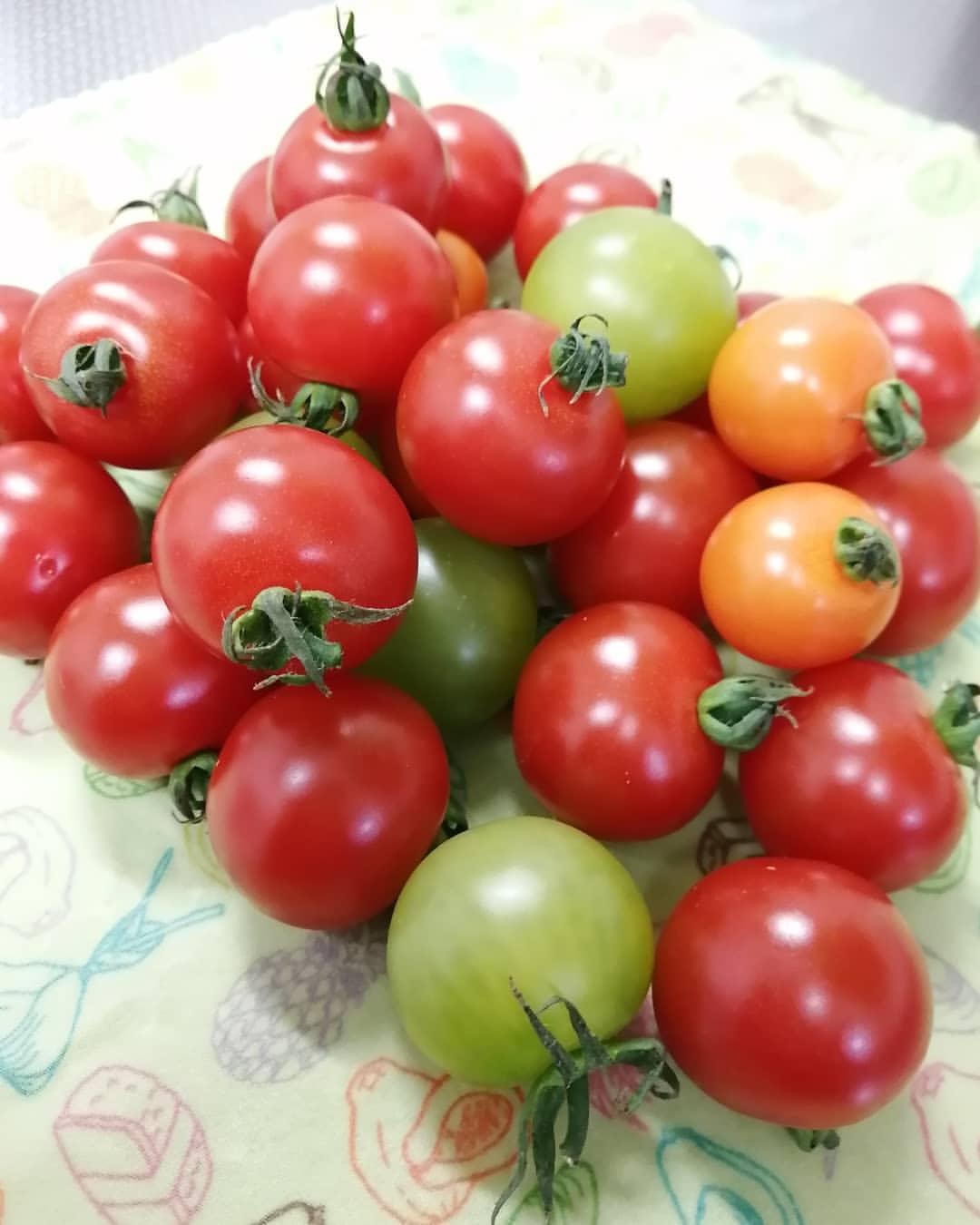 ミツロウラップ×トマト