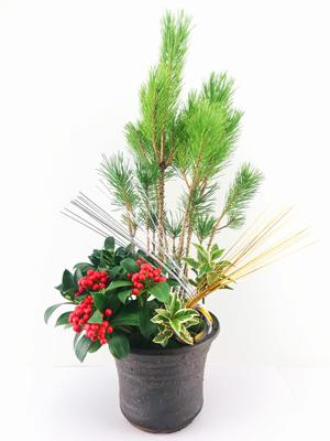2018年12月26日(水)~31日(月)新宿伊勢丹にて、お正月用の盆栽を販売いたします