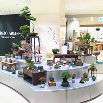 日本橋高島屋 本館2階 ギャラリールシック内に NEO GREEN がオープンしました