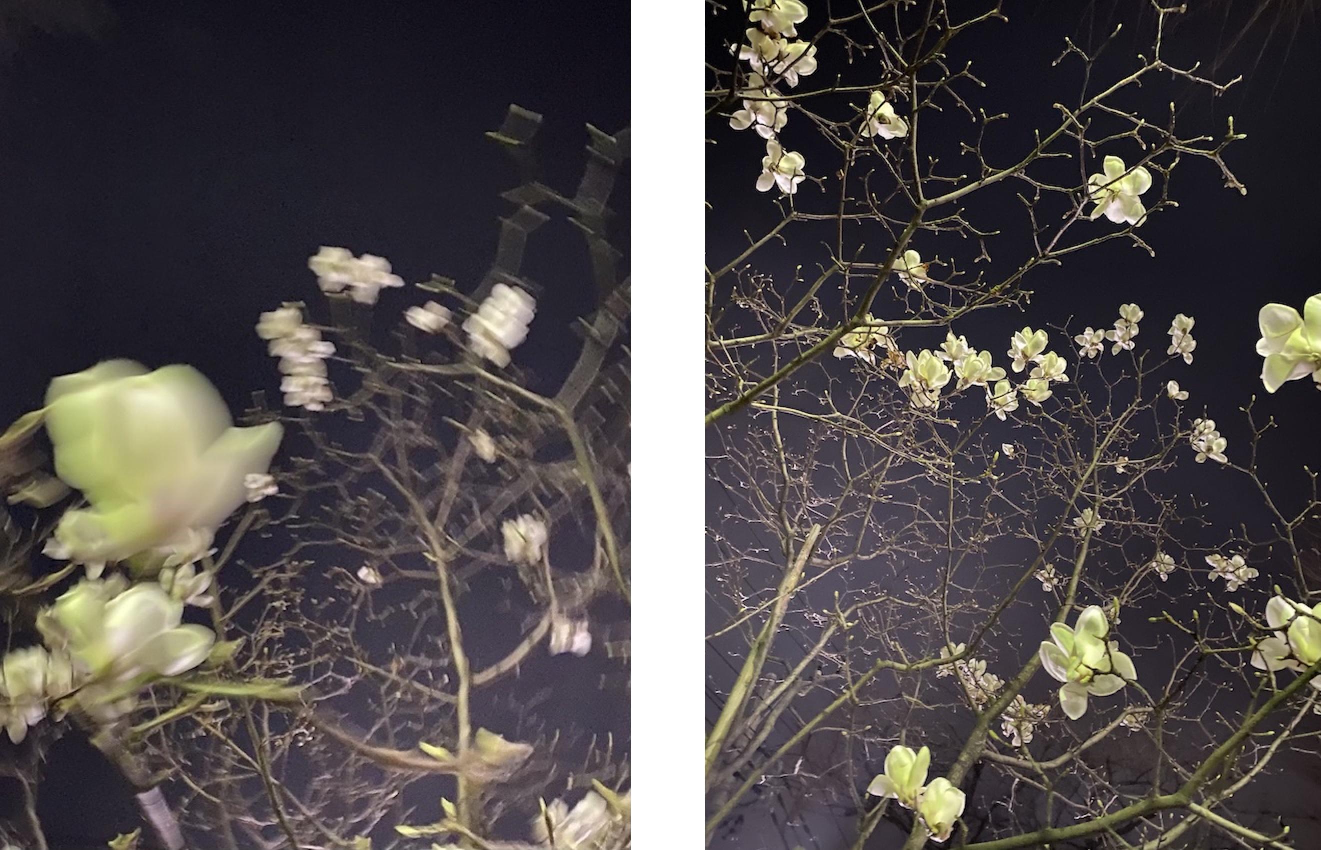 ✨  Star blossoms  🧚♀️✨