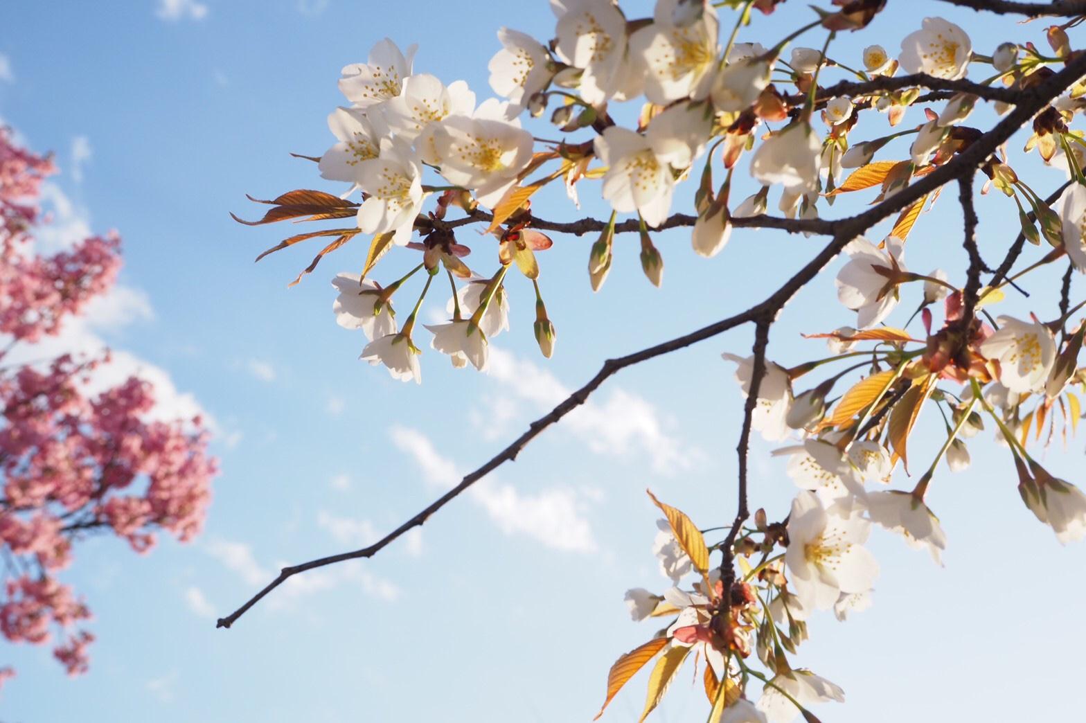 春の花が奇跡のコラボ!