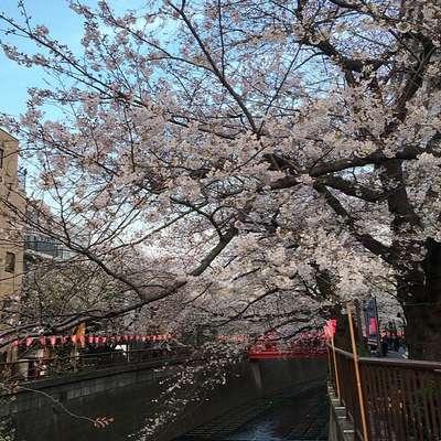 今年の桜の開花予想