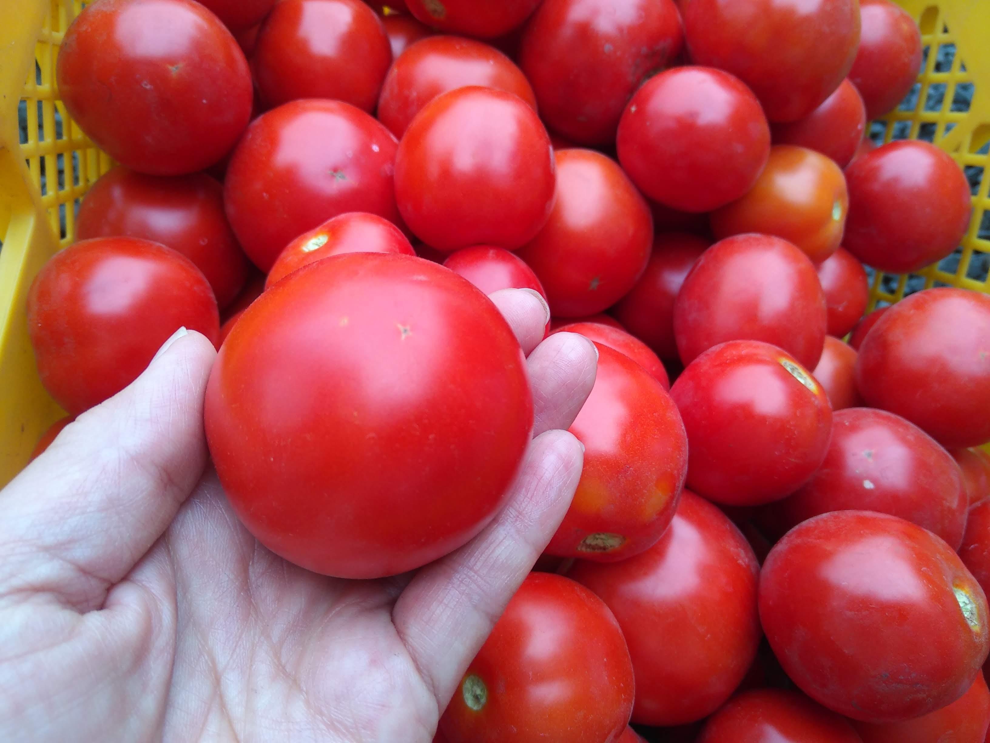 たまごのじかんのトマトソースはココが違う!