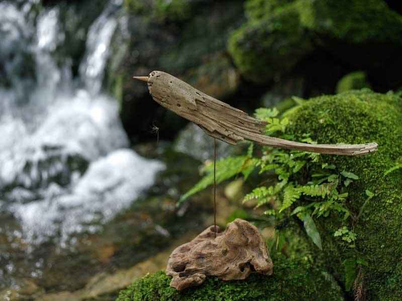 流木は生物の棲み家。