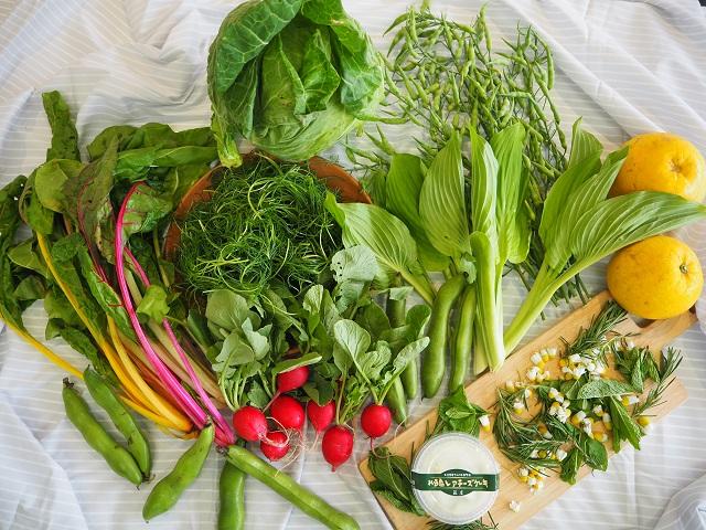 【NEW】ベジバルーンセット6月(水無月)『芒種の候 梅雨を乗りきれ元気いっぱい野菜たち』