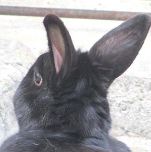 【ウワサの現場】板橋区立こども動物園高島平分園でうさぎさんとふれあってきた!?【本園は工事中です。】