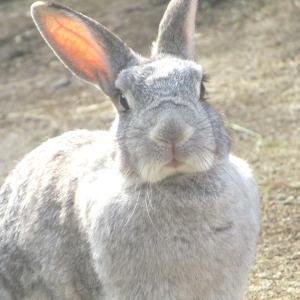 【うさぎさんのむら…?】埼玉県こども動物自然公園でうさぎさんとふれあってきた!!【動物園訪問記事】