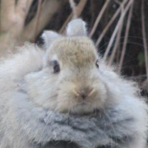 うさぎもかど最新情報 -うさもニュース- 6/1【YouTube】【動物園訪問記事】