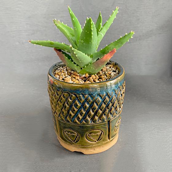 壱州窯・豊坂登氏の植木鉢。力強いアーティスティックな一鉢に。